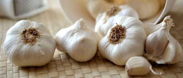После чеснока болит желудок или живот: полезные свойства растения и потенциальный вред, противопоказания и последствия слишком активного употребления, причины расстройства питания